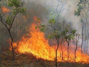 Πυρκαγιά στο Θυμάρι