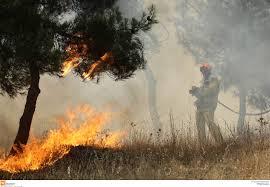 Πυρκαγιά δάσους
