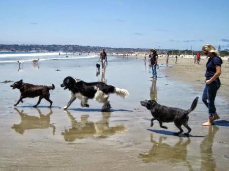 Ελεύθερη πρόσβαση ζώων στις παραλίες
